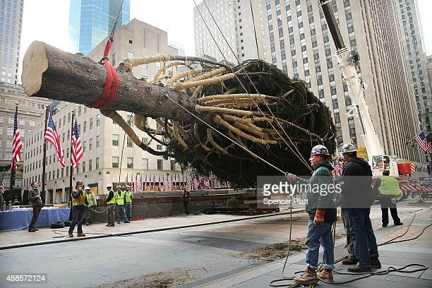 Rockefeller Center's Christmas tree an 85foot Norway spruce from central Pennsylvania is hoisted onto a platform on November 7 2014 in New York City...