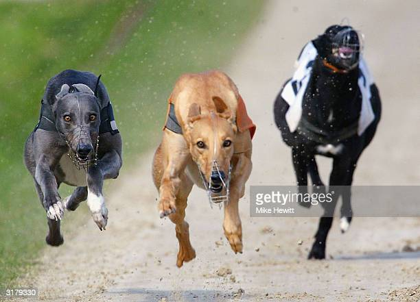 Rocken Roll and Java Boy battle it out in the fifth race at the Brighton and Hove Greyhound Stadium on March 31, 2004 in Hove, England.