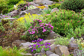 Rockery in the garden with variety of different flowers and plants