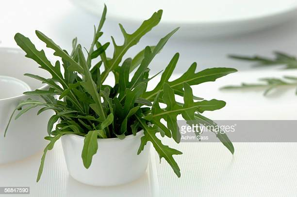 Rocket leaves in cup, close-up