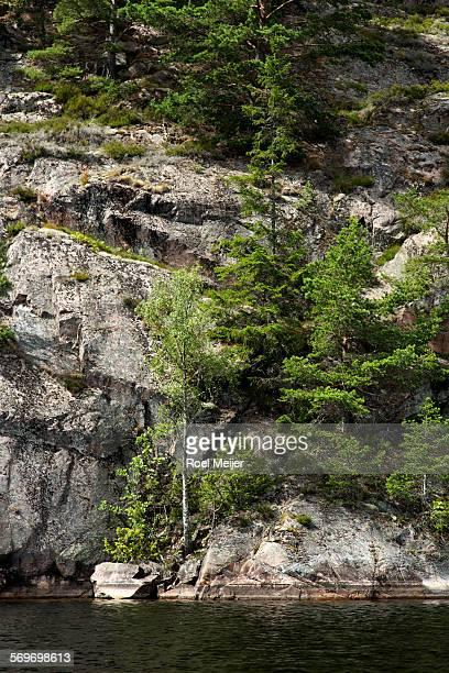 rockface with some trees - dalsland - fotografias e filmes do acervo