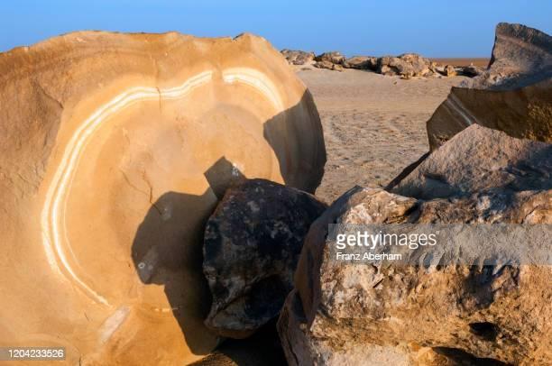 rockgarden, stone desert near al duqm, oman - petrified log stock pictures, royalty-free photos & images