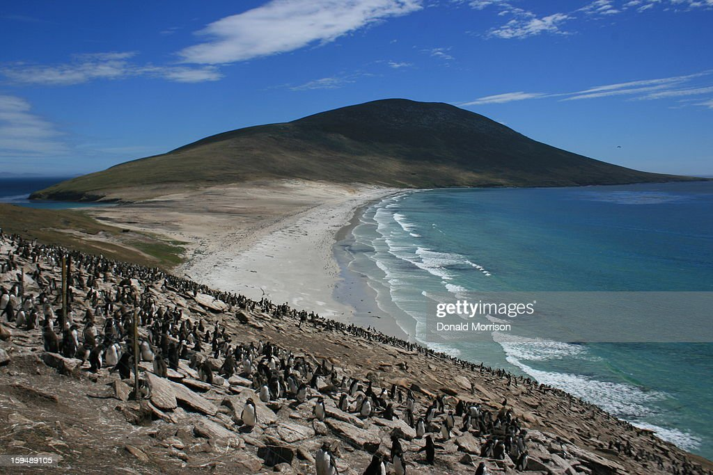 Rockhopper colony at The Neck, Saunders : News Photo