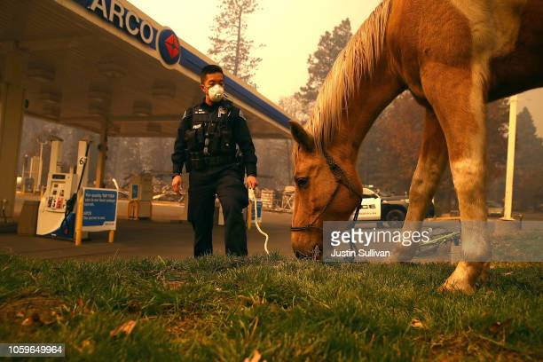 Rocklin police officer Randy Law tends to a horse that was found wandering after the Camp Fire moved through the area on November 9 2018 in Paradise...