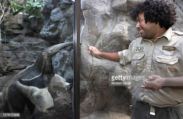 Rockport native Dan McLaughlin prepares to feed Jockamo, a giant anteater, a tubing filled with mealworms at the Franklin Park Zoo in Dorchester on...