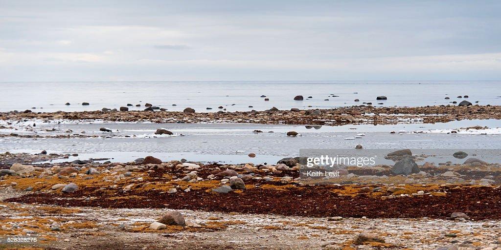 Rocks along the shore of the hudson bay; churchill manitoba canada : Stock Photo