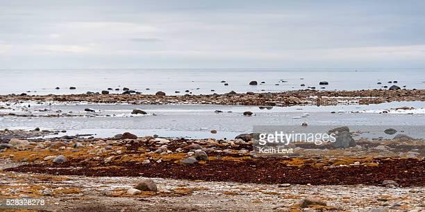 Rocks along the shore of the hudson bay; churchill manitoba canada