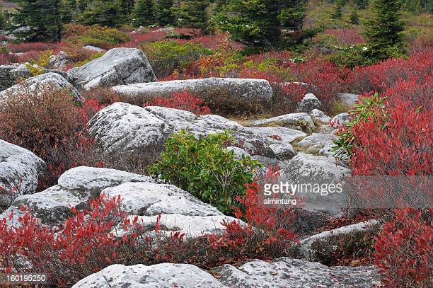 rocks and bush in fall - monongahela national forest stock photos and pictures
