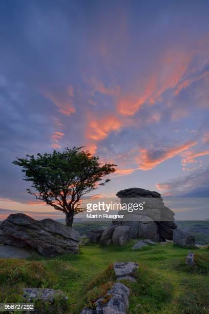 rocks and hawthorn tree on holwell tor near saddle tor at sunset dusk. holwell tor, saddle tor, dartmoor national park, devon, england, uk. - wildnis stock-fotos und bilder