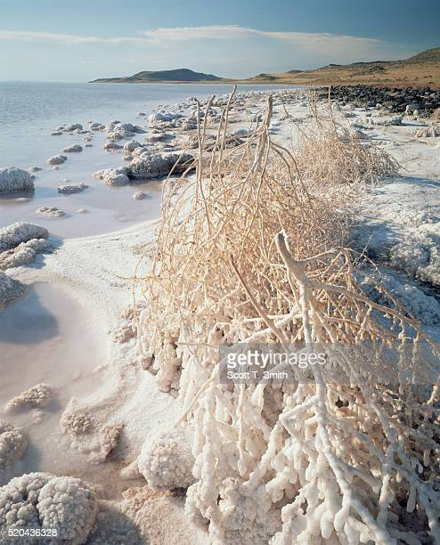 rocks and tumblweeds encrusted with salt - great salt lake stock pictures, royalty-free photos & images