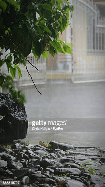 Rocks By Tree During Monsoon