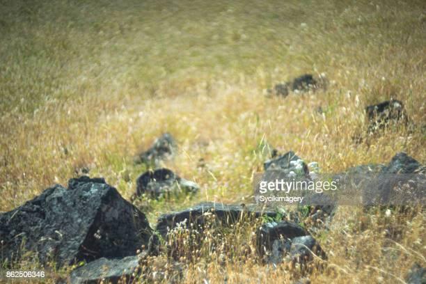 Rocks in field, shallow focus. swirly bokeh nature scene