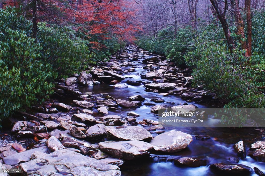 Rocks In Forest During Autumn : Stock Photo