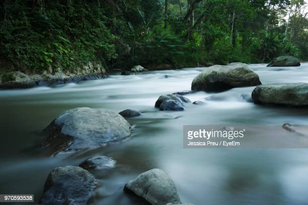 rocks in stream amidst trees in forest - ubud district stock pictures, royalty-free photos & images