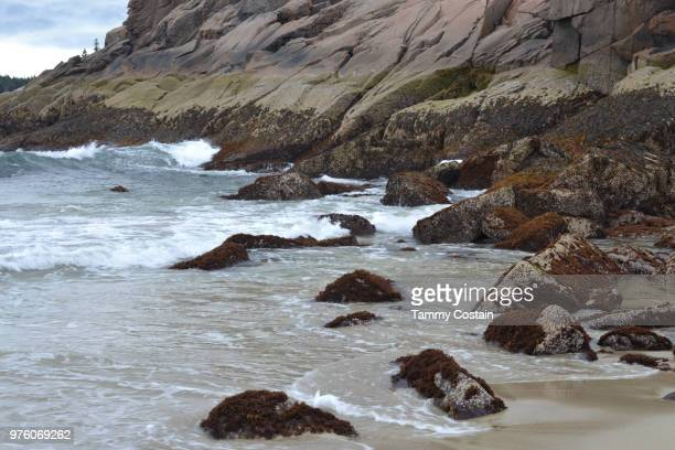 rocks on sandy beach bar harbor, maine - tammy bar stock pictures, royalty-free photos & images