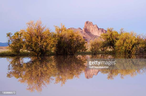 rocks reflecting in pond with salt cedars at sunrise in fall, shiprock, navajo indian reserve, new mexico, usa - shiprock stock photos and pictures