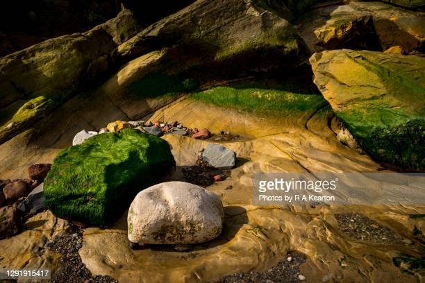rocky abstract at cornelian bay, north yorkshire - scarborough uk stock pictures, royalty-free photos & images