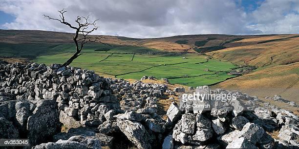 rocky area with bare tree - limestone pavement stockfoto's en -beelden