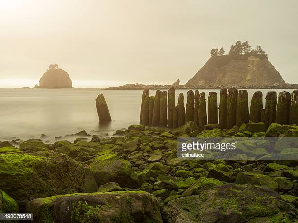 rocky beach in sunset, La Push beach, usa