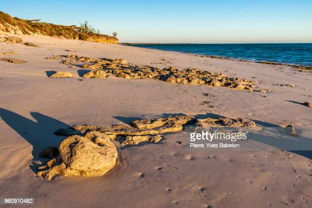 rocky beach - pierre yves babelon stock pictures, royalty-free photos & images
