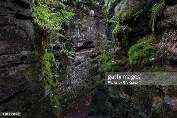 rocky chasm of luds church, staffordshire, england - rock wall stock pictures, royalty-free photos & images