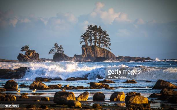 rocky coastline, british columbia, canada - vancouver island stock pictures, royalty-free photos & images