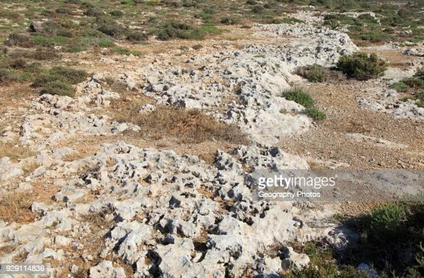 Rocky limestone bare surface showing effects of chemical weathering, Marfa peninsula, Malta.