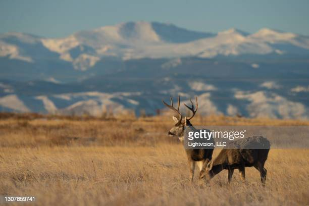 rocky mountain arsenal national wildlife refuge - commerce city colorado stock pictures, royalty-free photos & images