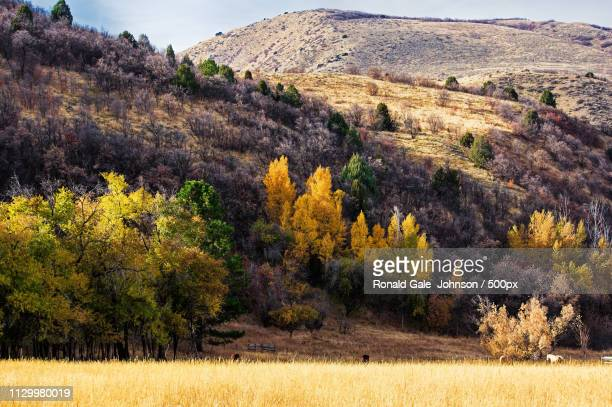 rocky mountain fall scenic - lombardy stock pictures, royalty-free photos & images