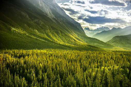 Rocky Mountain forest view of Mount Rundle in Banff National Park 936908894