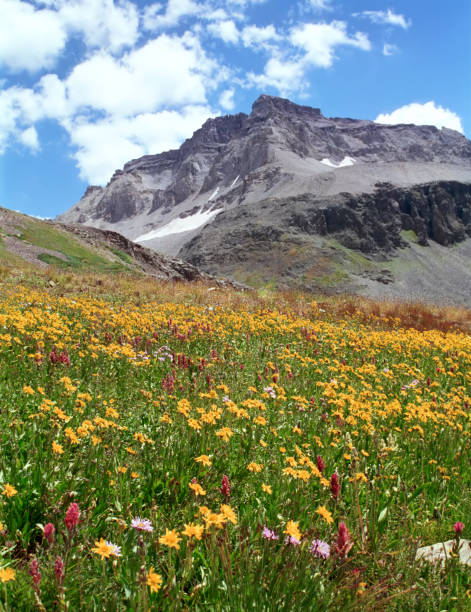 Rocky Mountains & Wildflowers