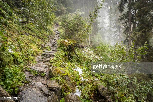 Rocky path / trail ascending through coniferous forest on steep mountain slope in the mist in autumn, Hohe Tauern National Park, Carinthia, Austria.