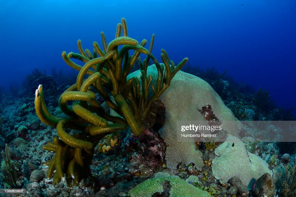 Rocky Reef. : Stock Photo