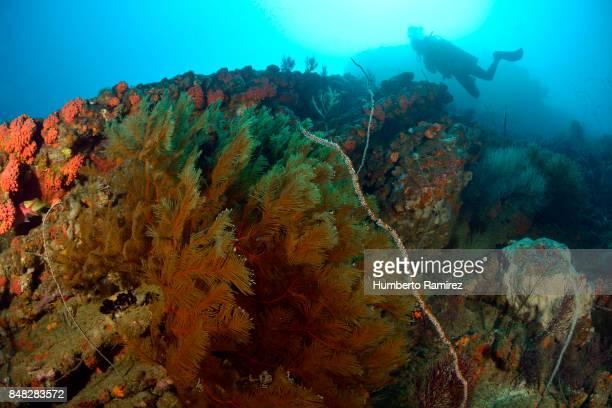 Rocky Reef.