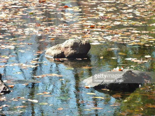 rocky reflections - noreen braman stock pictures, royalty-free photos & images