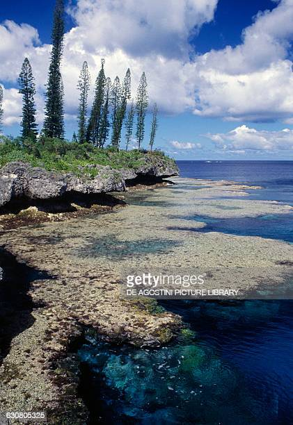Rocky seabed Loyalty islands New Caledonia Overseas territory of the French Republic
