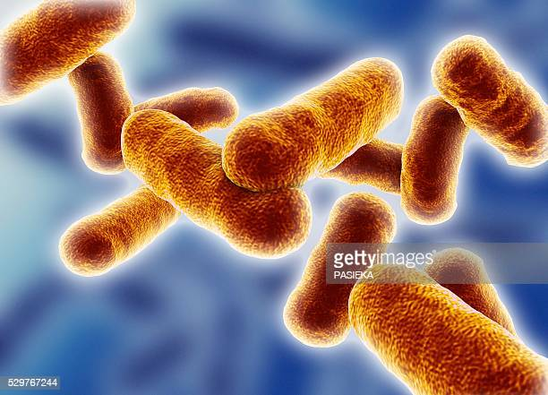 Bacillus Subtilis Stock Pictures, Royalty-free Photos & Images - Getty  Images
