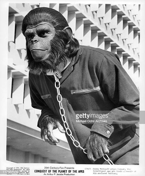 Roddy McDowall in a scene from the film 'Conquest of the Planet of the Apes' 1972