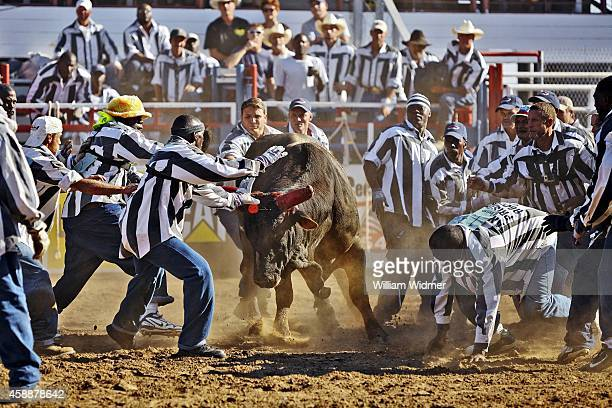 Angola Prison Rodeo View of inmates trying to remove poker chit during Guts Glory event at Louisiana State Penitentiary Inmates attempt to remove a...