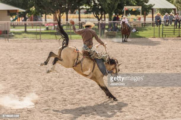 rodeo bucking bronco bareback riding - bucking stock photos and pictures