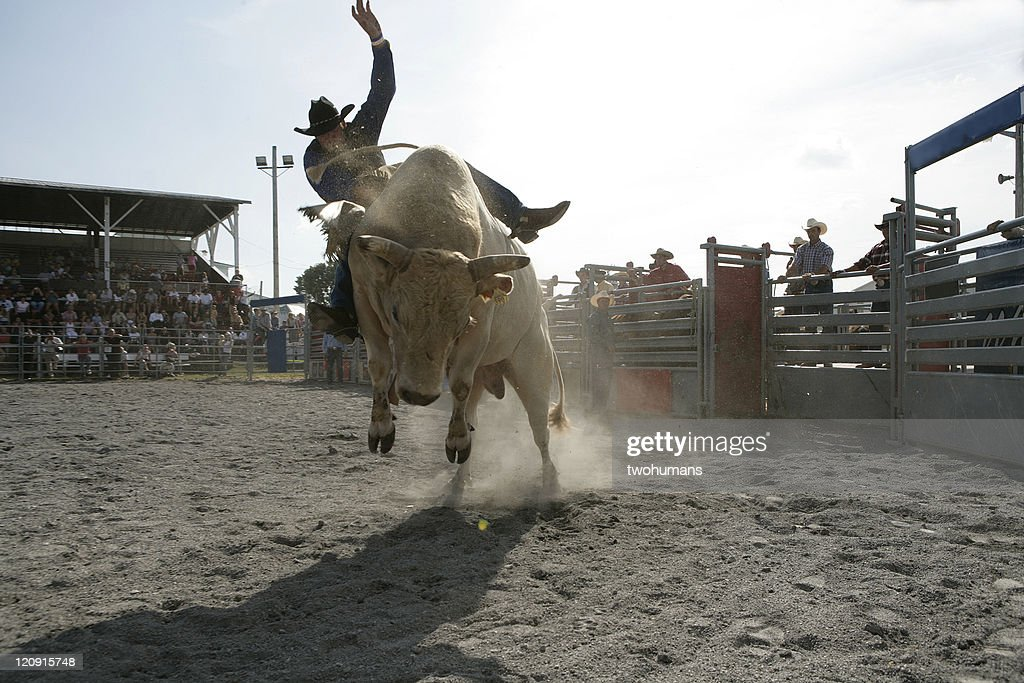 Rodeo - Bull Riding : Stock Photo