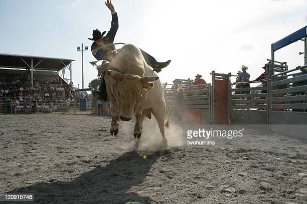 rodeo - bull riding - bullock stock photos and pictures