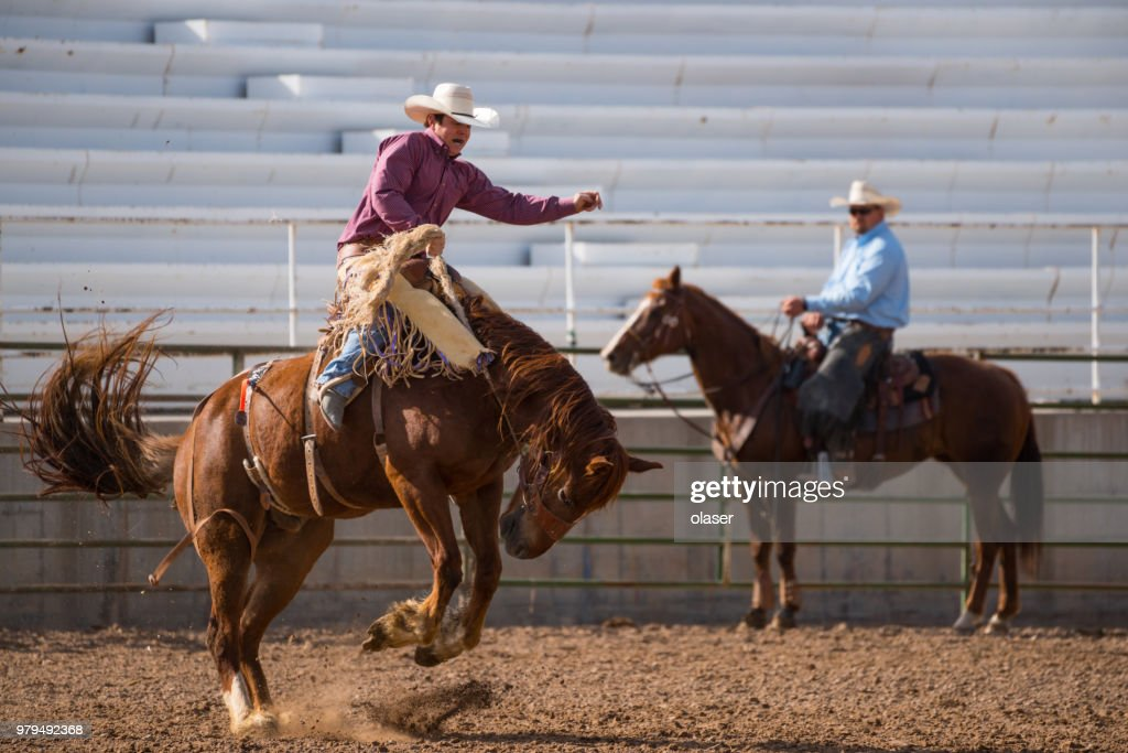 Rodeo cowboy and wild horse : Stock Photo