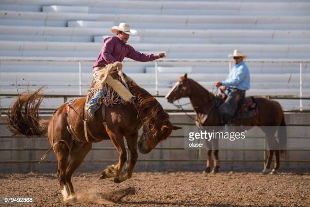 Rodeo cowboy and wild horse