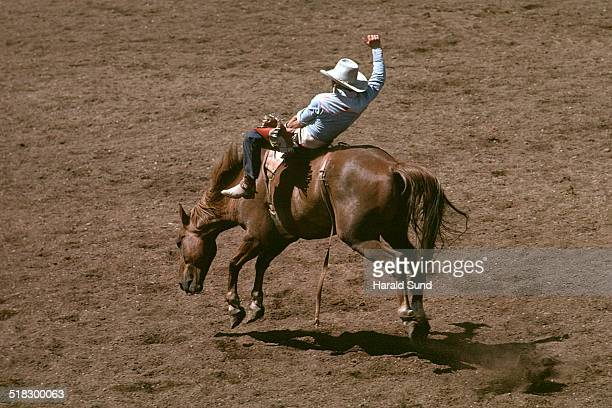 Rodeo cowboy rider on a bucking horse