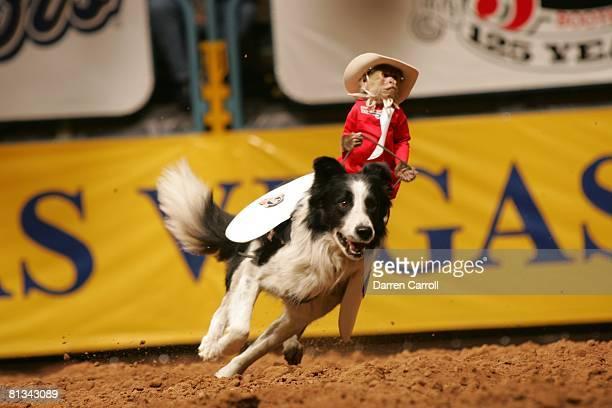 Rodeo National Finals View of monkey riding dog animal at Thomas Mack Center Las Vegas NV