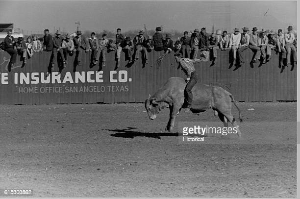 Rodeo performer riding a Brahma bull at the rodeo of the San Angelo fat stock show in San Angelo, Texas. March 1940.