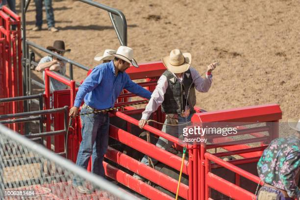 Rodeo Preparation at Chute