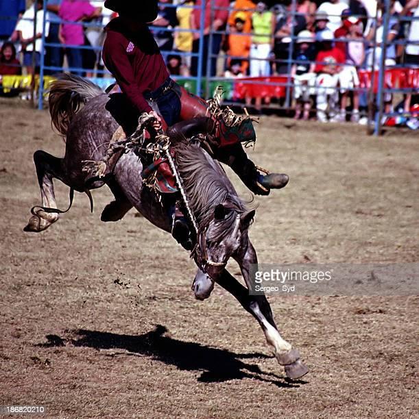 Rodeo riding action 02