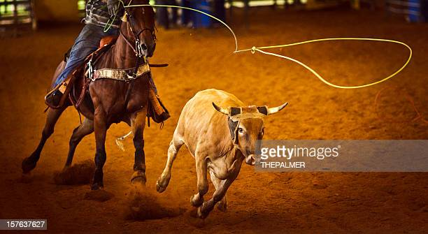 rodeo team roping - lasso stockfoto's en -beelden